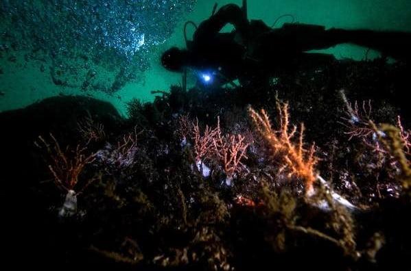 Denizlerin Yağmur Ormanları Mercanlar (2)