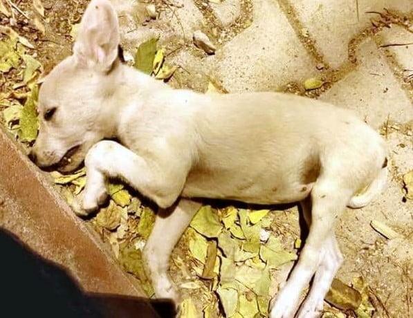Sokak Hayvanlarının Öldürülmesine İlişkin Suç Duyurusu Yapıldı (2)