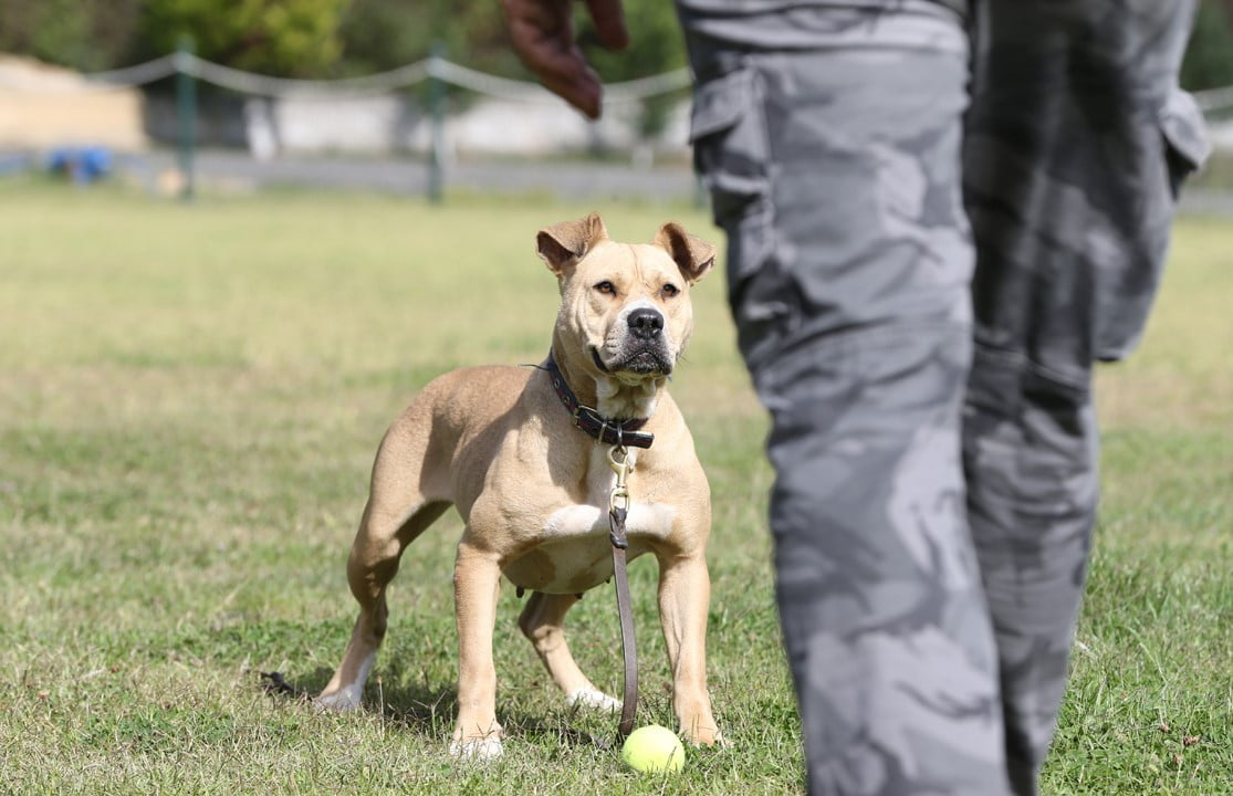 Sokak Köpekleri Artık Kayıpları Bulacak (3)