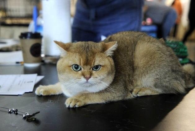 kediler-birincilik-icin-yaristi (2)